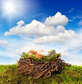 picture of grass bird  - nest with eggs and birds feather over green grass - JPG