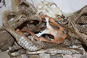 image of turtle shell  - Snake skins - JPG