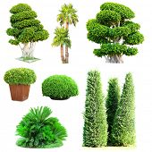 foto of tree trim  - Collage of green trees and bushes isolated on white - JPG
