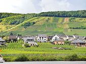 pic of moselle  - Ellenz Poltersdorf village and vineyards on Moselle riverbank Germany - JPG