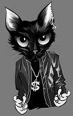 stock photo of rapper  - Kitten rapper  - JPG