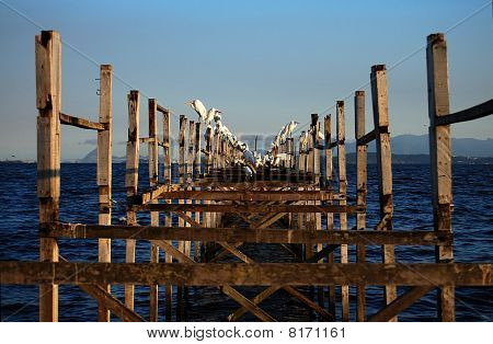 Worn Pier and Egrets IV