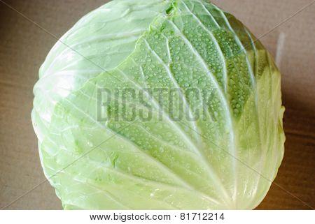 Cabbage Green Leaf