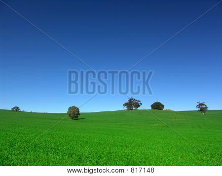 Campo del país