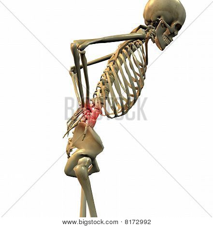 3D rendering of a human skeleton showing a person with back pain