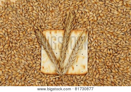 Biscuit And Wheat