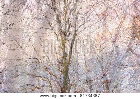 Wild Woods in Winter