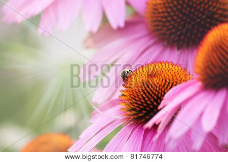 flower and bee