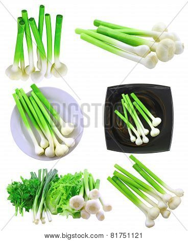 Collage (set) Of Young Garlic On White. Isolated