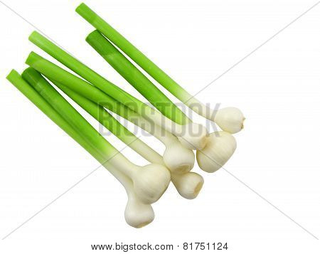 Young Garlic On White Background. Isolated