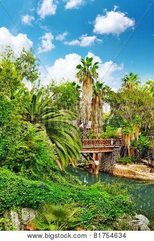 Beautiful landscape of humid tropical jungle