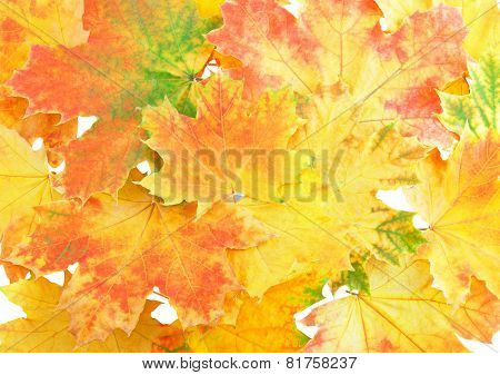 Background, Wallpaper-perfect Autumn Leaf .