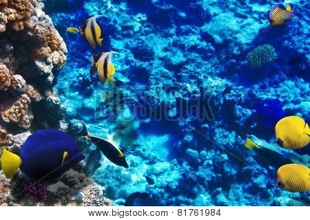 Coral And Fish In The Red Sea. Egypt, Africa.