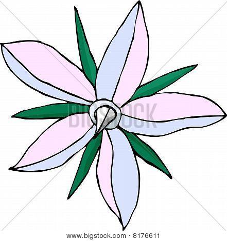 Borago Officinalis in Bloom