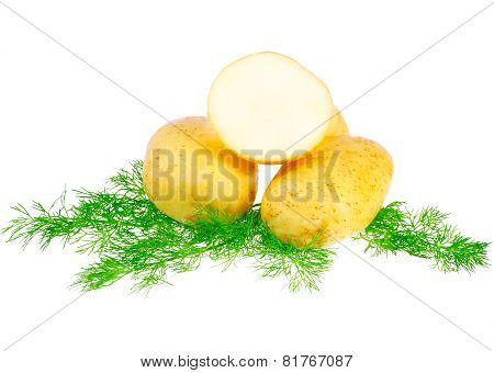 Young Potatoes, Decorating Of Dill . Isolated