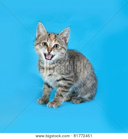 Striped Kitten Sitting On Blue And Meows