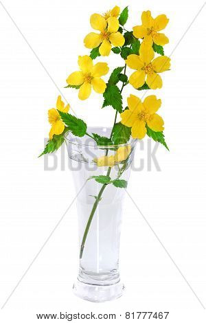 Marsh Marigold  Yellow Wildflowers In Vase Isolated On White Background .