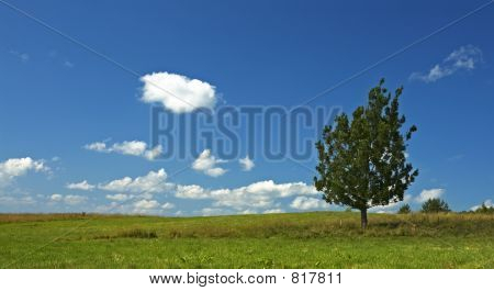 background of blue sky and tree in the field