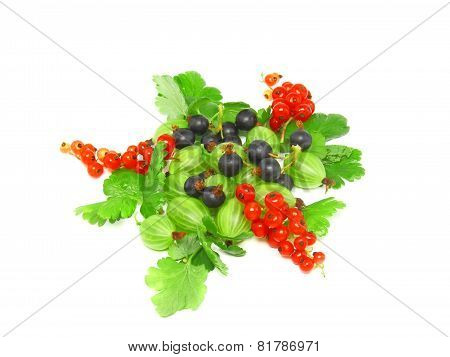 Berry Mix-red , Black Currant, With Leaf.isolated.