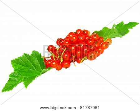 Red Currant With Leaf On White. Isolated.
