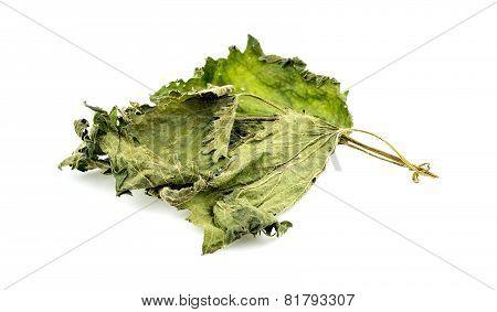 Nettle Tea Leaf