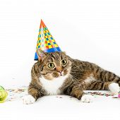 stock photo of white-tiger  - tiger cat with funny party decoration against white background - JPG