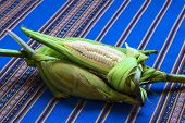 picture of corn  - Cobs of white corn called Choclo  - JPG