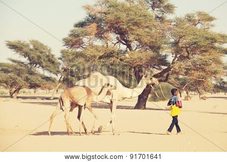 MEROE, SUDAN - JANUARY 10: Sudanese boy leads camels on January 10, 2010 in rural area near Meroe, Sudan. Sudan remains one of the least developed countries in the world.