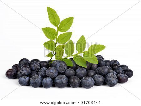 Blueberries with green leaf