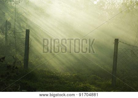 the sun's rays