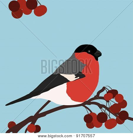Bright Bullfinch Bird
