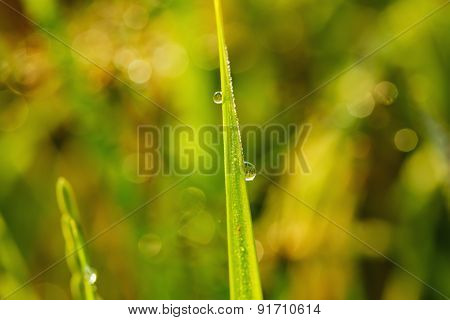 Dew Drops On Leaves   With  Blur Background