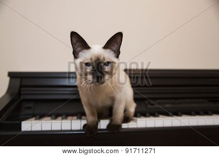Pussycat Is About To Jump Off The Piano