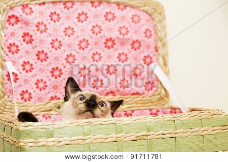 Little Kitten Is Hiding In The Laundry Basket With The Pink Background