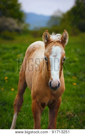 Cute Brown Foal In A Green Meadow