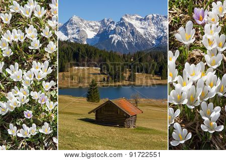 Collage - Alpine Landscape And Early Spring Crocus