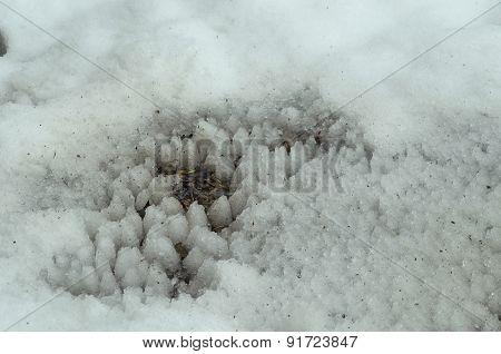 Winter lace on snow field below drops