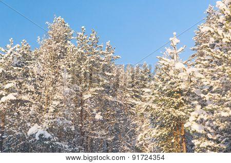 Wintry Landscape December Frost