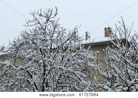 Frozen and snow covered tree.