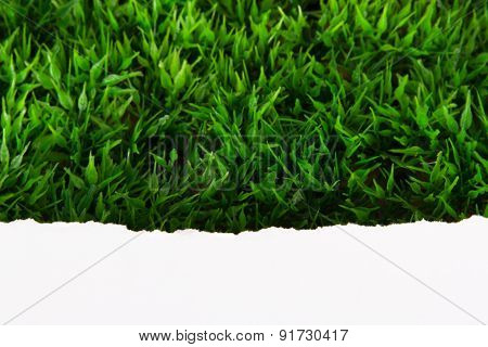 Teared Paper On Grass