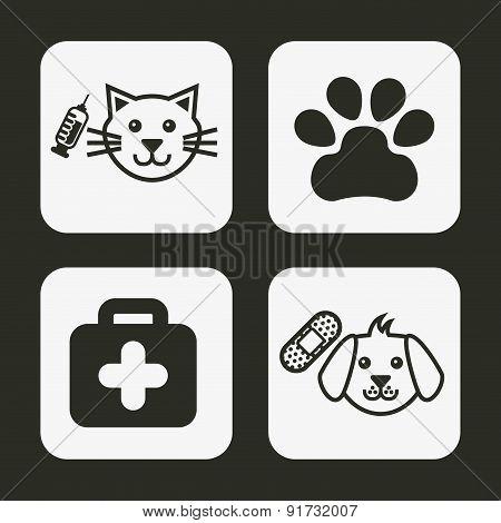 Pet design over gray background vector illustration