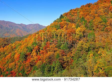 Colouful mountain during Autumn season
