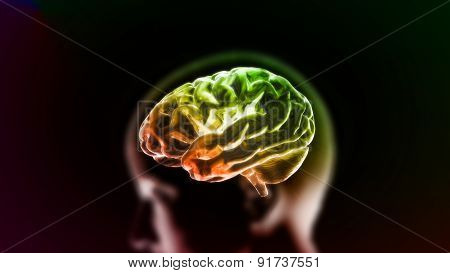 Colorful Orange Brain In Head