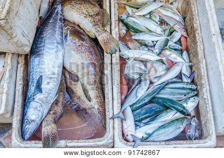 Fresh fishes on market, Island in Thailand
