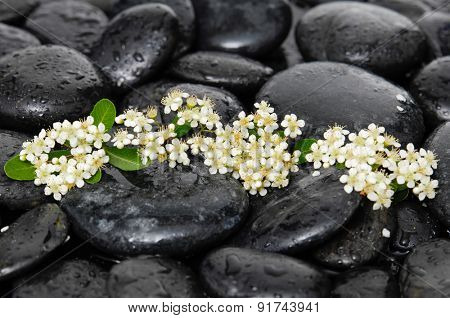 Tropical white flower with wet stones on wet background