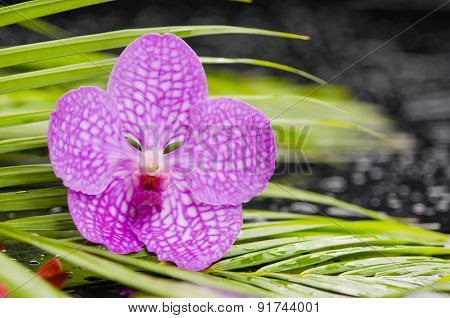 Still life with pink orchid with green leaf