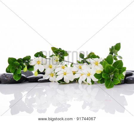 Set of branch gardenia with therapy stones