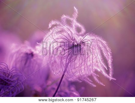 Fluffy - softness flower