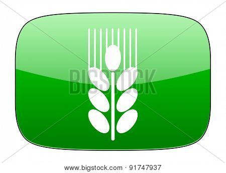 grain green icon agriculture sign
