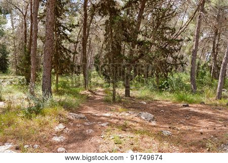 Solar Lawn In A Pine Forest